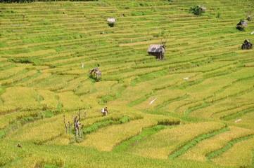 riziere et maison