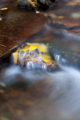 Yellow fallen leaves in a fast moving mountain stream.