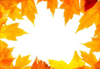 frame autumn