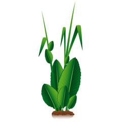 Green Plant Natural Organic Vector
