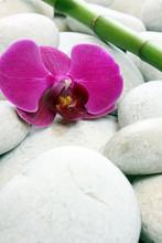 le bambou et l orchidée