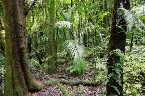 Fototapete urwald  Fototapete Wald - Exotisch - Wald - Pixteria