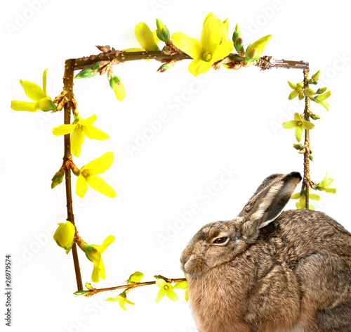 Hare and spring frame with spring buds