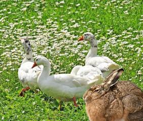 spring farm animals