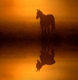 Fototapeta pejzaż - natura - Zwierzę domowe