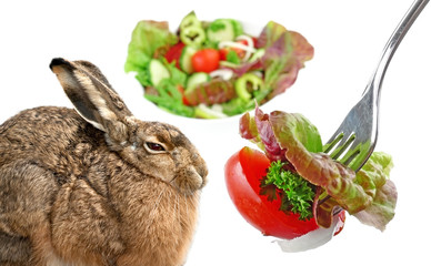 hare and vegetable