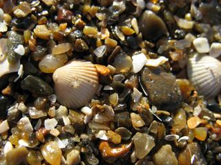 Kleine Schätze am Strand