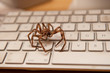 big brown spider on a white keyboard - 26990914