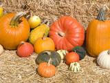 Pumpkin Showcase at Farmers Market poster