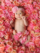 Adorable smiling baby girl lying in a bed of pink roses