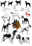 Dogs canine variety colorful selection poster
