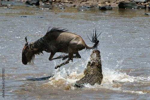 Fotobehang Krokodil On a hair from death.