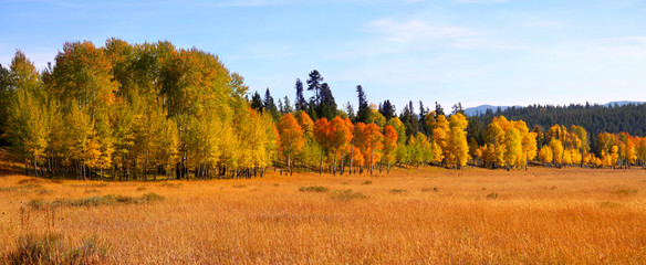 autumn trees in Gran tetons national park