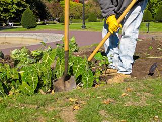 Landscaper at  work in Public Garden