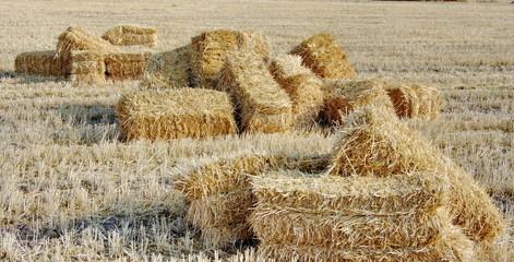 Bottes de paille dans un champ de blé