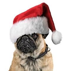 Weihnachtsmops weiß