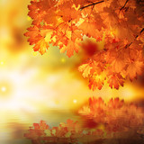 Fototapety Abstract autumn maple reflexion