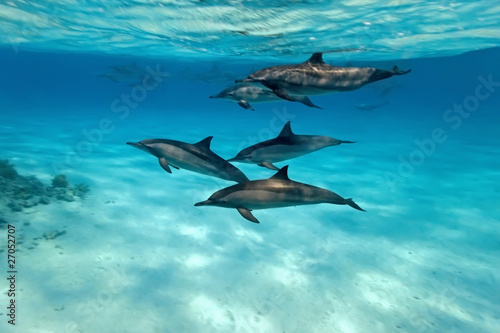 Foto op Canvas Dolfijn Dolphins in the sea