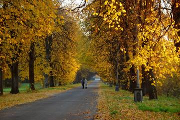 Beautiful alley in park, golden autumn