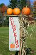 Orange pumpkins on top of pumpkin sign