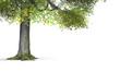 Der Baum - freigestellt 01