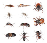 Pests and vermins on human and in humans homes. poster