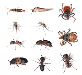 Pests and vermins on human and in humans homes.