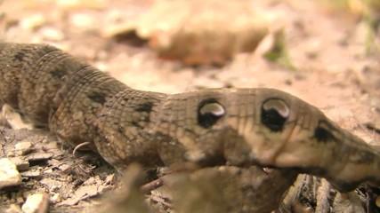 Caterpillar slowling crawling past HD 1080