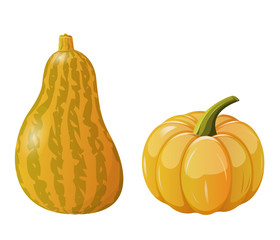 Two pumpkin on white background