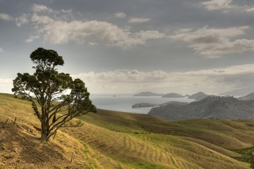 Coromandel Coast