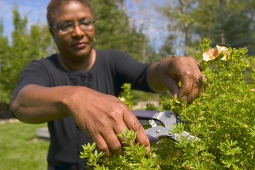 Woman Cutting Hedges