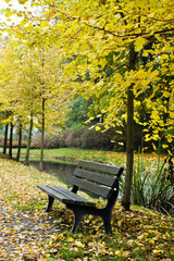 Bench in autumn forest