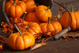 Fototapety Small pumpkins with wood bucket