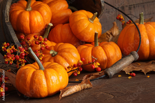 Small pumpkins with wood bucket