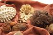 Schwamm und Blüte