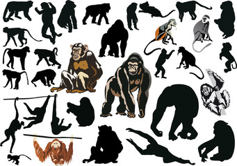 large set of different monkeys