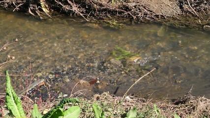 Aguas contaminadas, suciedad