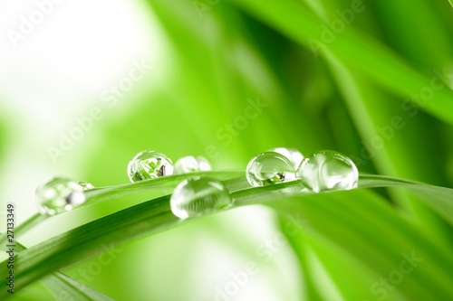Obraz na Szkle water drops on the green grass