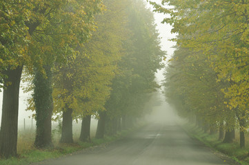 Lime Tree Avenue. Pivola, Slovenia