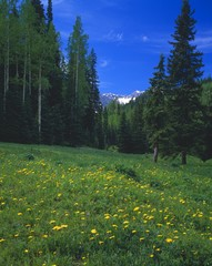 Mountain Meadow, Uncompaghre National Forest
