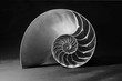 Black and white nautilus shell with geometric pattern - 27136534