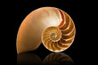 Nautilus shell on black background - 27136566