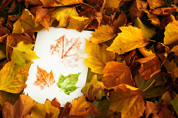 Autum Prints Amongst Leaves