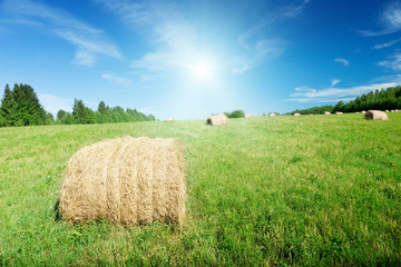 harvested grass in roll and perfect sunny day