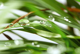 green background drops with grass