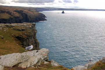 seagulls on tintagel coast
