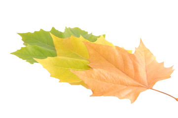 Blätter - Herbst - Bunt