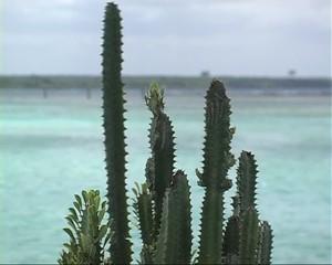 Cactus sul mare