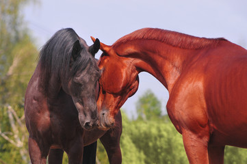two horses communicating