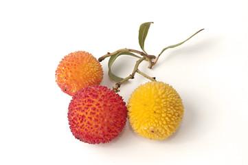 Tres frutos de madroño